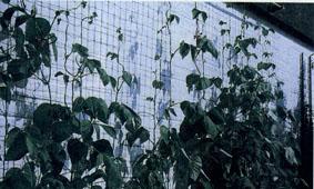 Как изготовить сетку для вьющихся растений для озеленения фасадов